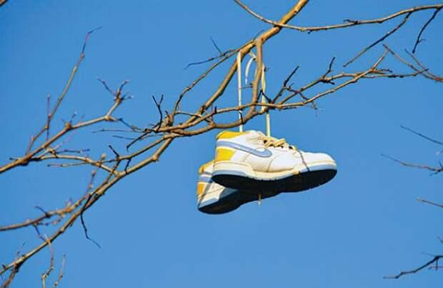 Вот зачем на яблоню вешают ботинки!