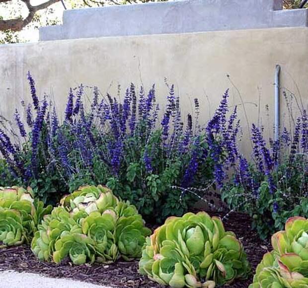 Идеи клумб для суккулентов — кактусы и очитки
