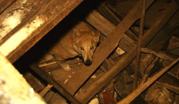 Как в Академгородке собаку спасали