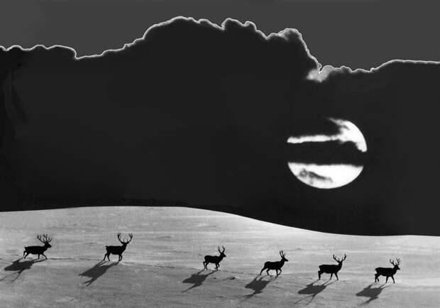 Подборка работ фаворитов конкурса «Дикая природа России – 2018»: national geographic, в мире, животные, красота, природа, россия, фото