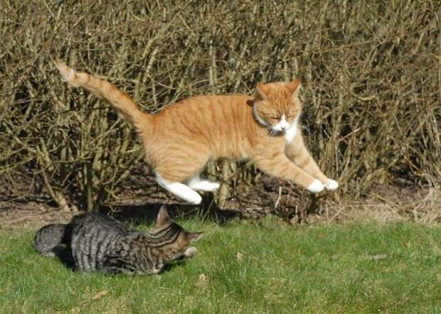 cat_flying_fight_09