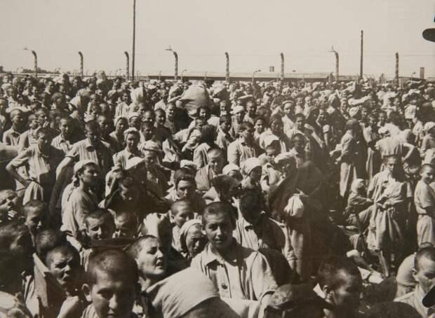 Альбом из Освенцима