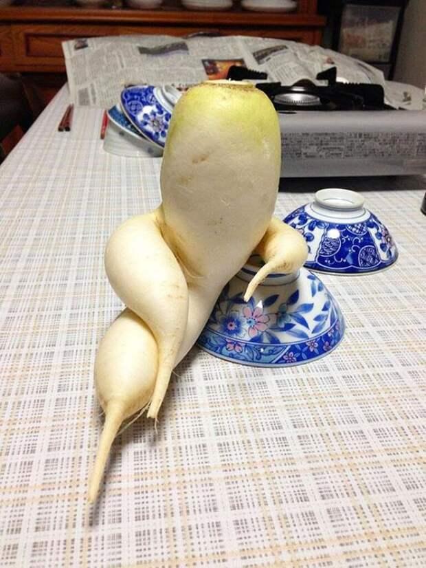 8. Кокетливая редька овощи, фрукиы