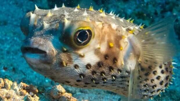 Учёные разгадали загадку таинственных кругов на дне морском