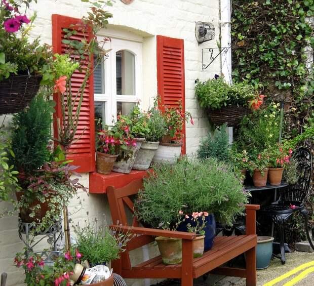 Как украсить дачу растениями в кадках