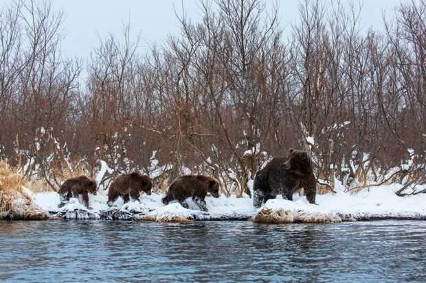 Запредельно красивая «Дикая природа России – 2018» national geographic, в мире, животные, красота, природа, россия, фото