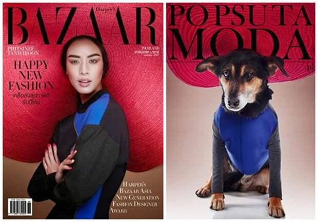 Бездомные собаки стали fashion-моделями