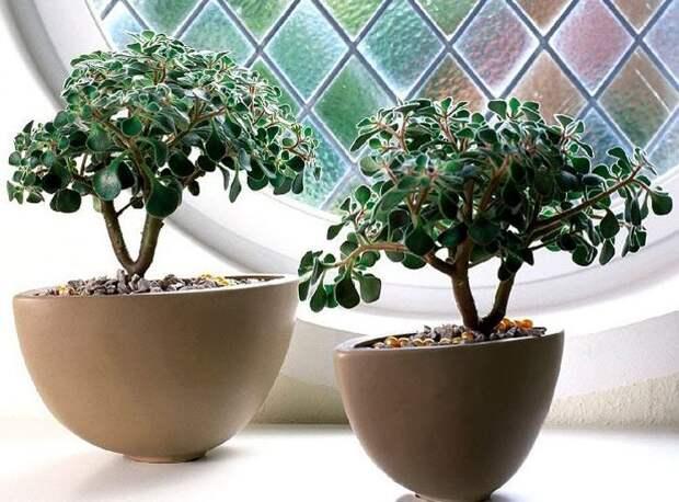 Комнатные растения, которые принесут в ваш дом любовь