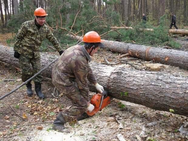 Каждый житель России имеет право на лес