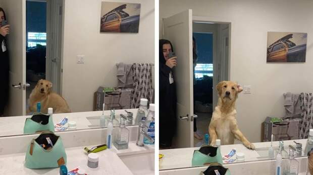 Пес увидел себя в зеркале во время игры в прятки и это нечто!