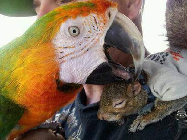взаимопонимание белка, животные, коты, попугай, прикол, юмор