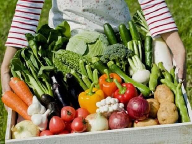 Народные заговоры на удачный посев и богатый урожай...