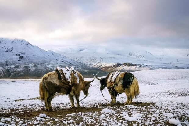 Заснеженные горы в августе Ваханский коридор, афганистан, вид, горы, природа, путешествие, фотомир