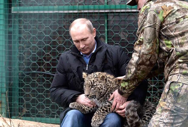 В 2014 году Путин зашел в вольер к шестимесячному леопарду Грому