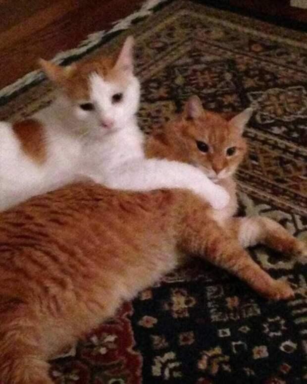 Женщина забрала котика из приюта, а уже через день вернулась за вторым