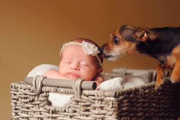 младенцы и собаки первая фотосессия (2)