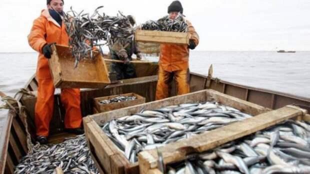 В Крыму пограничники пресекли нелегальный рыбный бизнес