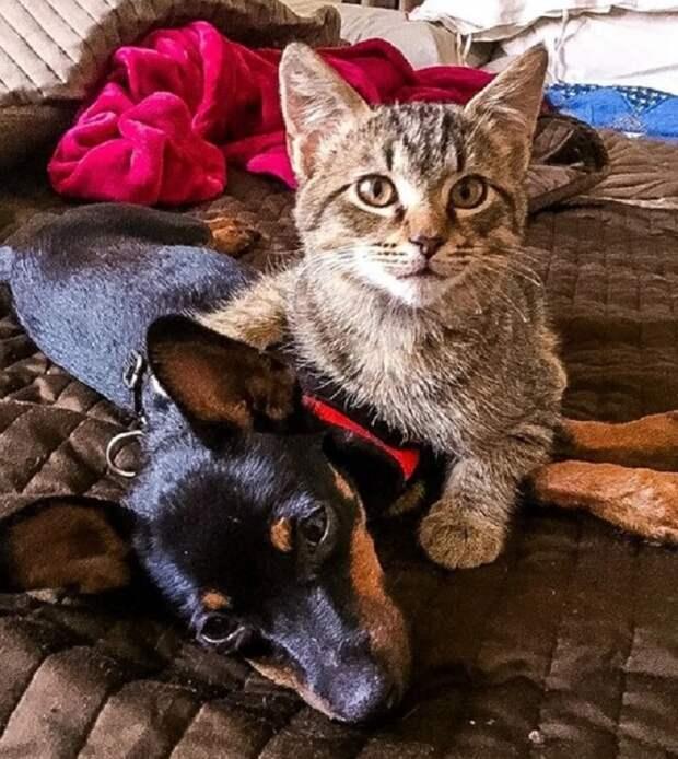 Когда женщина вышла на прогулку с псом, к ним вдруг приблизился котенок. Одинокое существо жаждало внимания