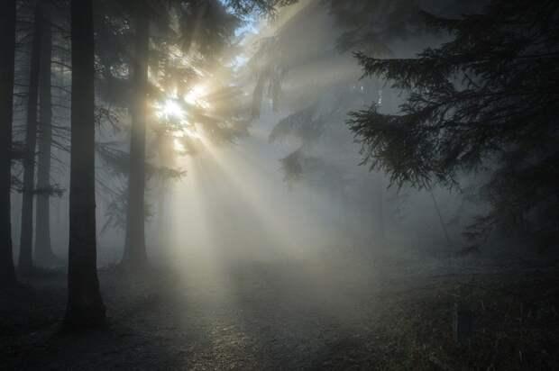 В субботу в Рязанской области ожидается до +15°С