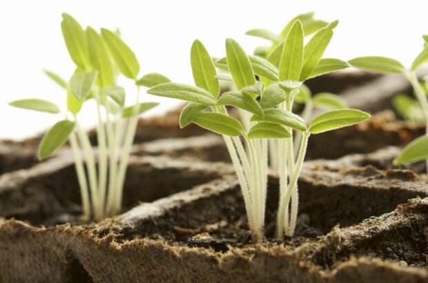 Картинки по запросу Растение