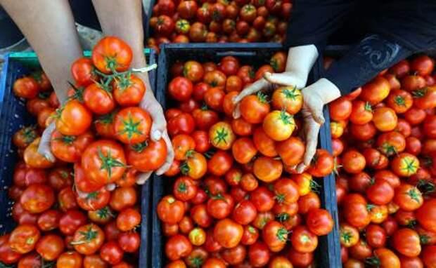 По самые помидоры: Карл Стурен, он же швед, он же «Чумак», теряет на Украине бизнес