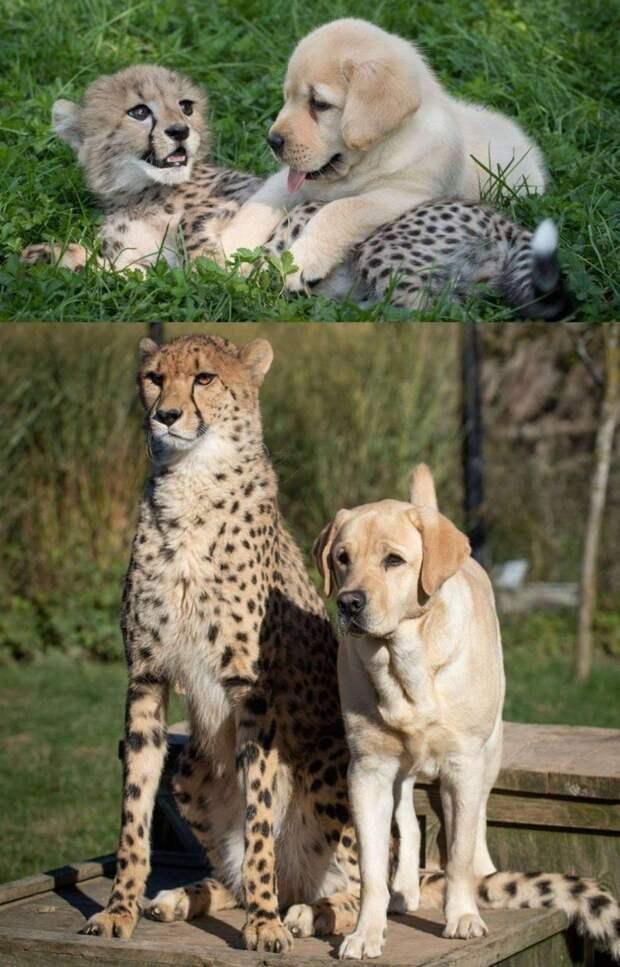 20 потрясающе милых и смешных животных, которые растопят даже самое холодное сердце