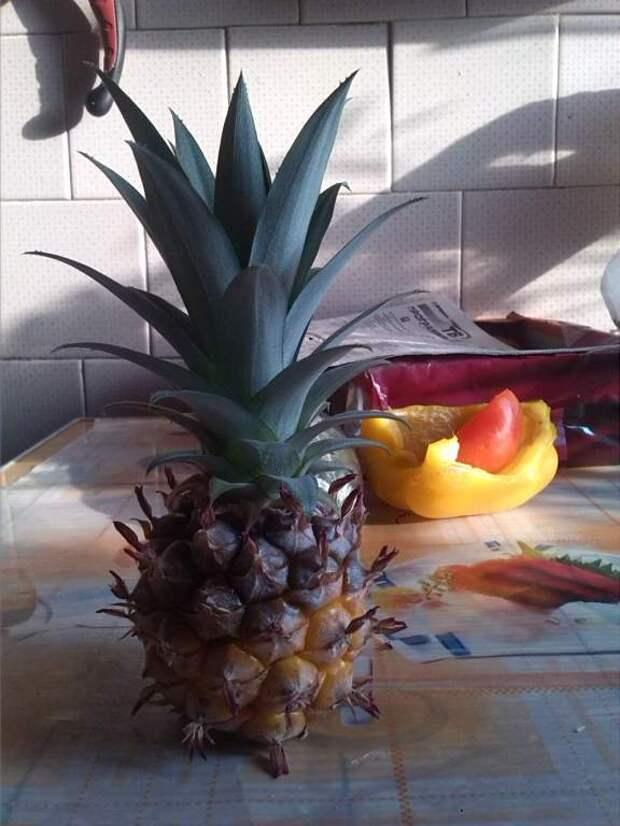 Как выращивали ананас на подоконнике