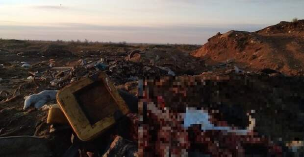 Трупы животных продолжают свозить на закрытый скотомогильник в Крыму