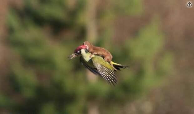 Удивительная природа, удачно пойманные кадры жизни животных