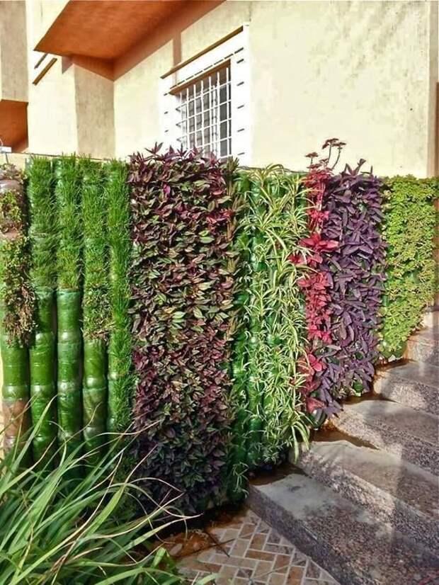 Конечно, выгоднее всего запустить на забор вьющиеся растения Фабрика идей, дача, забор, сетка Рабица, украшение