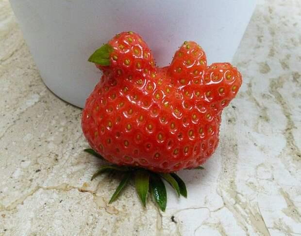 1. Клубничка-несушка овощи, фрукиы