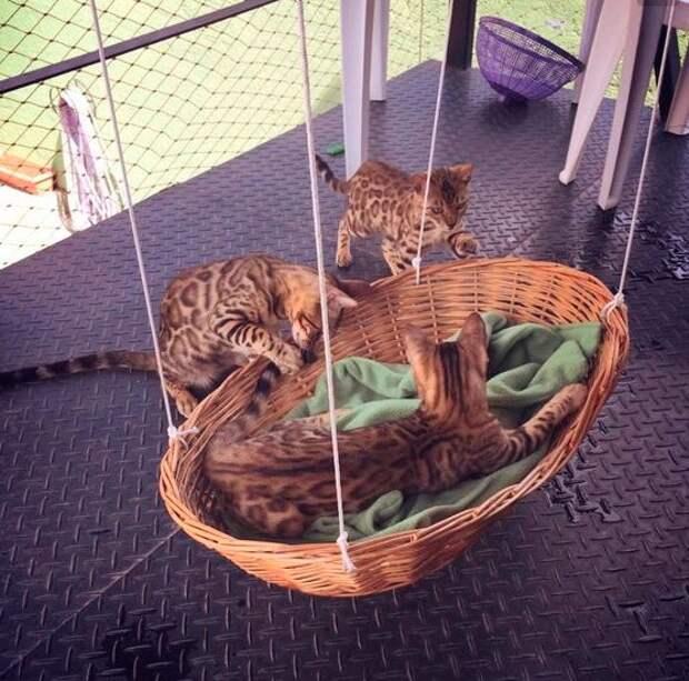 Кошачий спортивный рай (подборка)