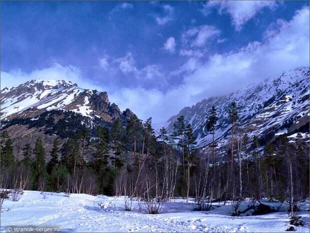 Баксанское ущелье сосны горы