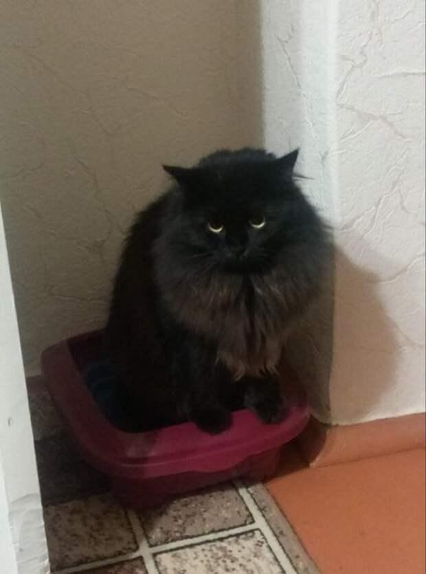 Рассказ о найденыше – приемыше кошке Чучундре или просто Чуче