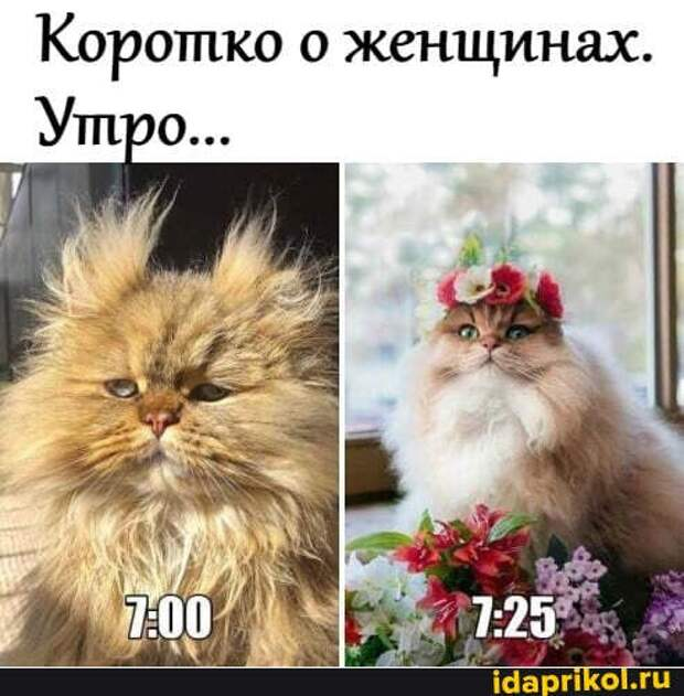 3085196_korotko (492x501, 45Kb)