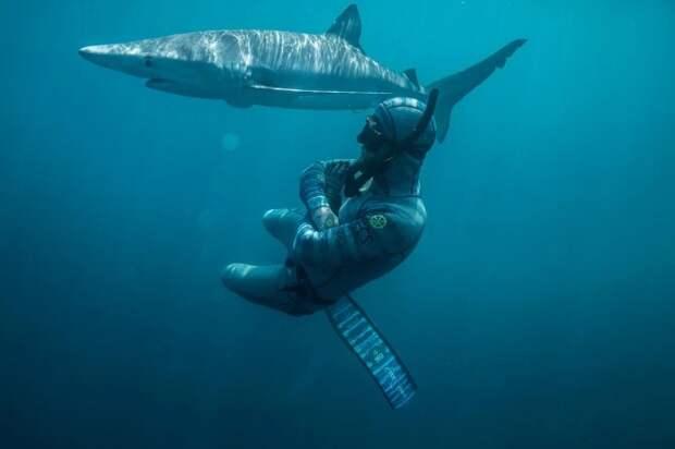 Улыбка смерти: как бесстрашный дайвер контактирует сакулами