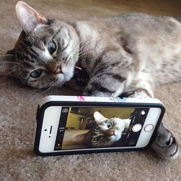 История самой известной кошки инстаграма