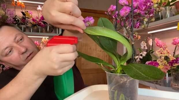 Обработка орхидеи, которую нужно провести сразу после её покупки