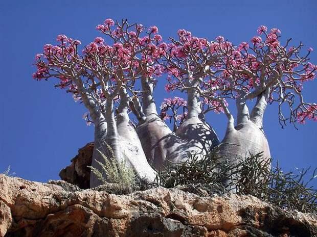 Остров Сокотра (Йемен) (3)
