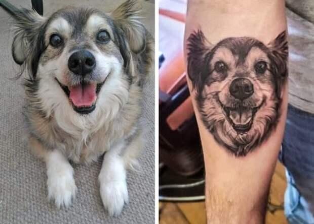 собака и тату с ней на руке
