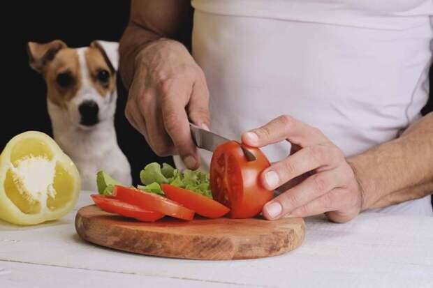 Новый экологический тренд: кошки и собаки становятся веганами