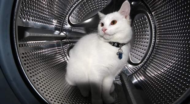 Использовал три жизни издевяти: кот провел 12 ужасных минут встиралке