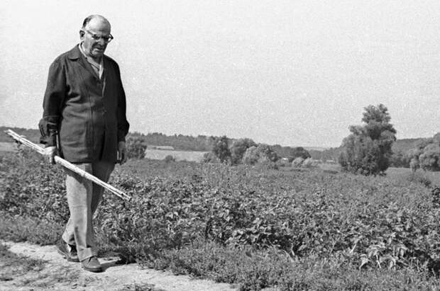 За что писателя Паустовского «лишили» Нобелевской премии?