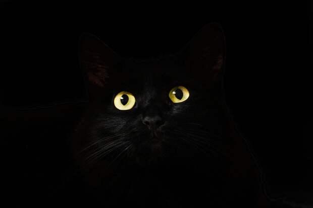 Эксперты нашли объяснение необычным привычкам кошек