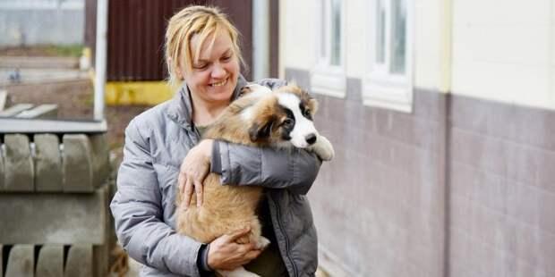 Собянин: 26 мая волонтеры вернутся в 13 приютов для бездомных животных. Фото: mos.ru