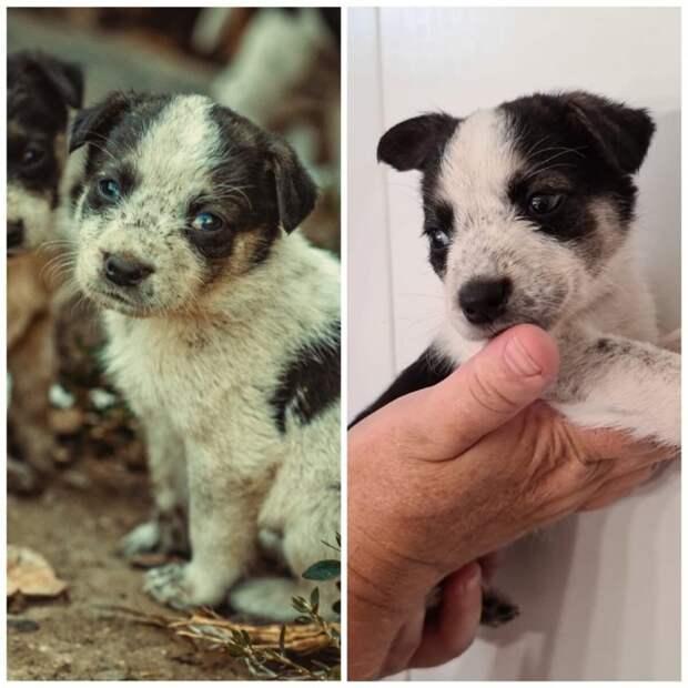 Увидев грязных щенков-сирот, женщина заплакала и занесла их в дом