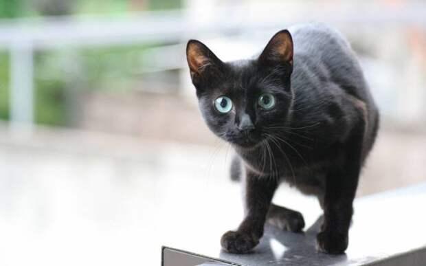 Два мистические истории про кошек животные, факты