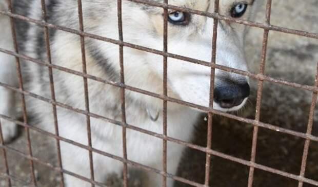 Жизнь собачья: почему в Ростовской области растет число безнадзорных животных