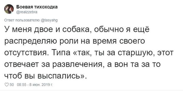 5. Тася Никитенко, животны, забавно, кот, кошка, люди, твиттер, юмор