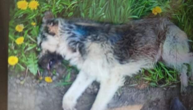 Бездомную собаку отловили в СНТ Подольска по просьбе жителя